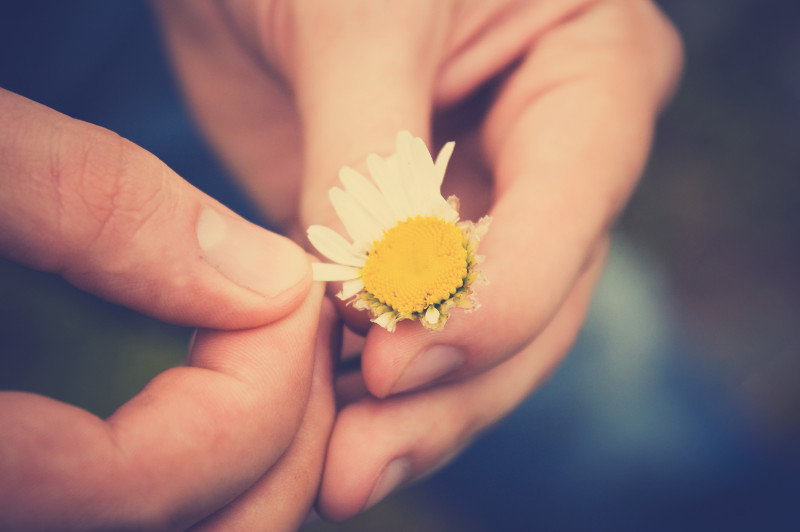 a person pulling the petals off a daisy
